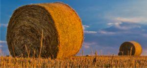 Terenurile agricole, achiziţionate doar de fermierii din România